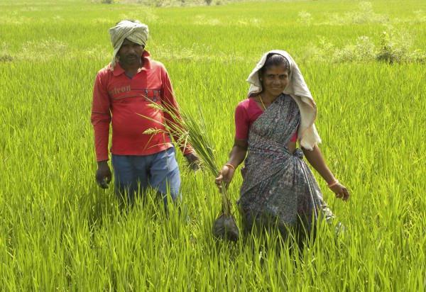 "Tribal villager, Kowasalya Thati (R), 35, tends to her rice paddy crop with her husband in Khammam district, India's southern state of Andhra Pradesh March 20, 2012. Kowasalya's family is one of hundreds of thousands who belong to India's 700 listed tribes who are at last gaining legal titles to the land they have lived on for generations, thanks to a legal aid scheme run by the Andhra Pradesh government with international advocacy group Landesa. In the scheme, which is likely to be rolled out nationally, young people often armed with only a secondary-level education are drawn from mud-and-brick villages and trained as paralegals, then sent out to help people to understand their rights and secure title, or ""patta"", to their land. Picture taken March 20, 2012. To match Feature HUNGER-INDIA/ REUTERS/AlertNet/Nita Bhalla/Files (INDIA - Tags: AGRICULTURE POLITICS SOCIETY POVERTY)"